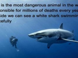 the-worlds-most-dangerous-animal