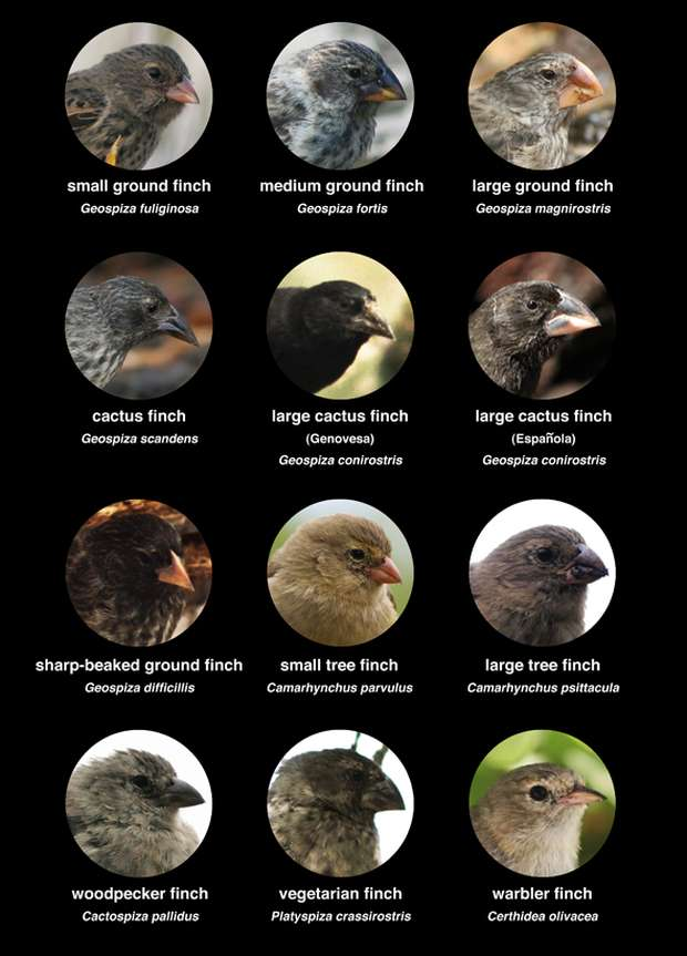 charles-darwin-finches