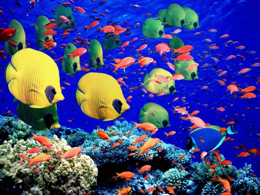 Red sea embryonic ocean search of life for Red fish blue fish key west