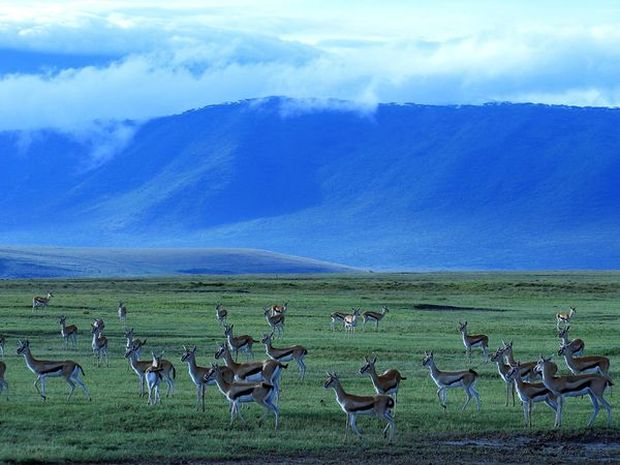 ngorongoro-crater-wildlife