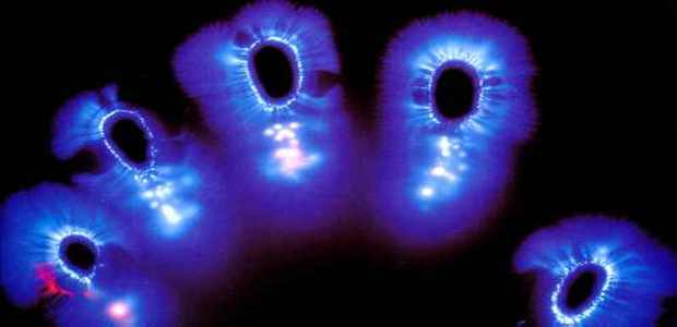 The Science Behind Auras And Kirlian Photography