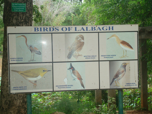 birds-of-lal-bagh