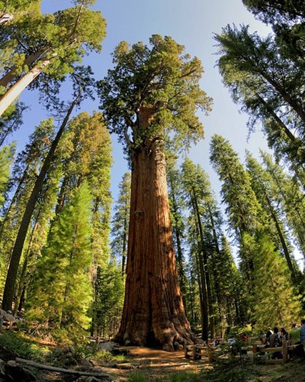 general-sherman-giant-sequoia-usa